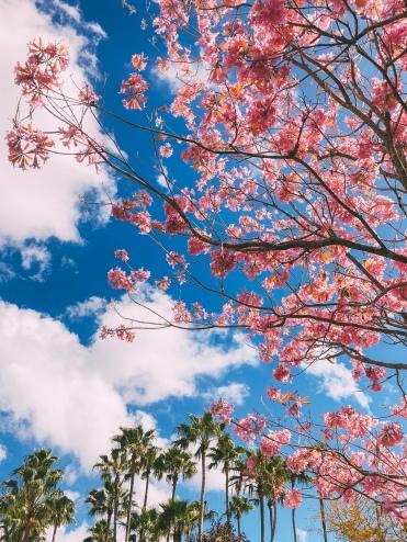 Spring has Spring in Disney World, Florida